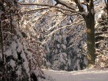 zima leśna Obraz Royalty Free