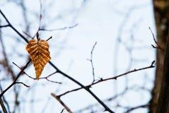 Zima liść Obrazy Royalty Free