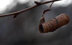 Zima liść Zdjęcie Royalty Free