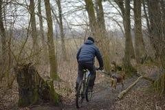 Zima mężczyzna jedzie bicykl w drewnach z psem zdjęcie stock