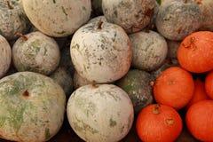 Zima melon Zdjęcie Stock