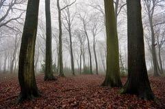 zima mgliści drewna Fotografia Royalty Free