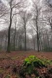 zima mgliści drewna Obraz Stock