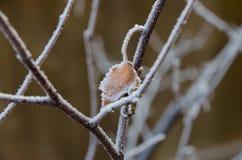 Zima mróz Fotografia Stock