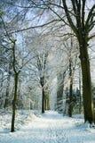 Zima mrozowy Lasowy Tudor Brugge zdjęcia royalty free