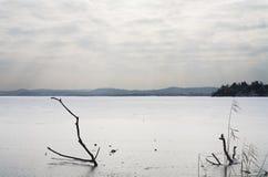Zima mrozu jezioro z bagażnikami i chmurnym niebem zdjęcie royalty free