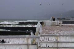 Zima na Czarnym morzu: lód i frajery Zdjęcia Royalty Free