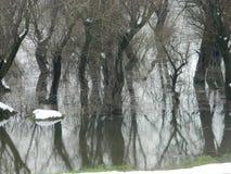 Zima na Danube obraz stock