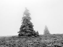 Zima na Feldberg górze Obrazy Royalty Free