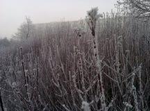Zima na Nowym Year& x27; s dzień obraz royalty free