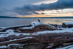 Zima Na Puget Sound Zdjęcia Royalty Free