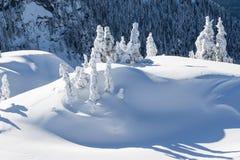 Zima na Zalesionej górze Fotografia Stock