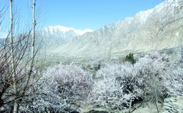 Zima naturalny widok zim mroźni drzewa fotografia royalty free