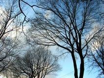 zima nieba drzew Obraz Royalty Free
