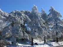 Zima śnieg Zdjęcia Stock