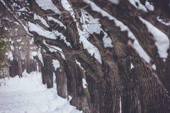Zima śnieg i mróz Zdjęcia Stock