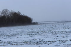 Zima śnieg i wiatr Zdjęcie Royalty Free