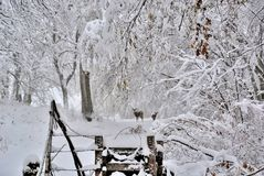 Zima śnieg z rogaczem na wiejskiej drodze Fotografia Stock