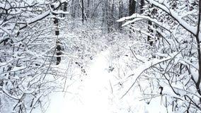 Zima śniegu drewna obrazy stock