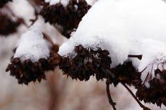 Zima śniegu etiuda Obraz Royalty Free