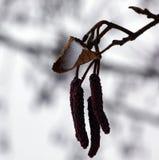 Zima śniegu etiuda Fotografia Stock