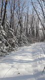 Zima śniegu las Obrazy Stock