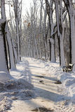 Zima śniegu park obraz stock