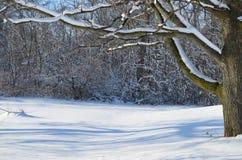 Zima śniegu scena Zdjęcia Royalty Free