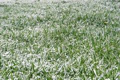 Zima śniegu trawa Zdjęcia Royalty Free