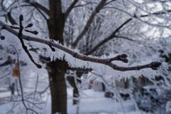Zima no jest dla ptaków Fotografia Royalty Free