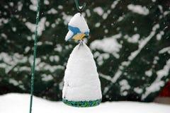 Zima no jest dla ptaków Zdjęcia Stock