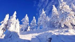 Zima obrazek Zdjęcia Stock