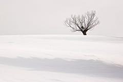 Zima osamotniony drzewo Obrazy Royalty Free