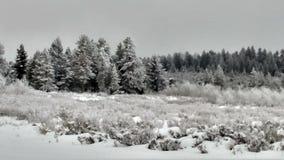 Zima outdoors w mój życiu zdjęcie stock
