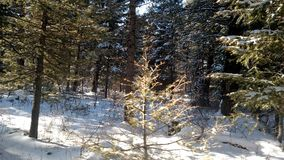 Zima outdoors w mój życiu Zdjęcia Stock