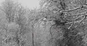 Zima płatków śniegu spadać zdjęcie wideo