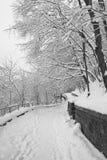 Zima park Obraz Royalty Free