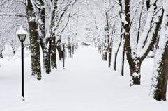 zima park lane Fotografia Royalty Free