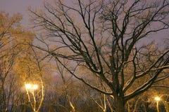 Zima park, nocy oświetlenie, zaświeca jaśnienie śnieg na gałąź magia zima, wintergarden Zdjęcie Stock