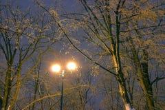 Zima park, nocy oświetlenie, zaświeca jaśnienie śnieg na gałąź magia zima, wintergarden Obraz Stock