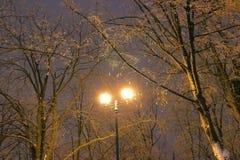 Zima park, nocy oświetlenie, zaświeca jaśnienie śnieg na gałąź magia zima, wintergarden Zdjęcia Stock