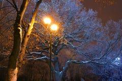 Zima park, nocy oświetlenie, zaświeca jaśnienie śnieg na gałąź magia zima, wintergarden Zdjęcie Royalty Free