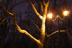 Zima park, nocy oświetlenie, zaświeca jaśnienie śnieg na gałąź magia zima, wintergarden Fotografia Royalty Free