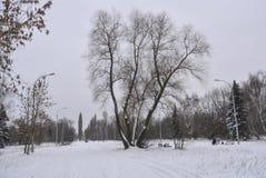 Zima park w Kijów Obraz Royalty Free