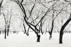 Zima park w śniegu Zdjęcia Royalty Free
