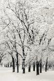 Zima park w śniegu Obrazy Royalty Free
