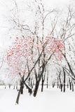 Zima park w śniegu Zdjęcie Stock