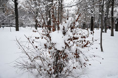 Zima park w śniegu w Kazachstan Fotografia Stock