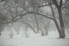 Zima park z wyginającymi się drzewami w mgle Obrazy Royalty Free