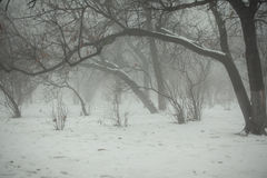 Zima park z wyginającymi się drzewami w mgle Zdjęcia Royalty Free